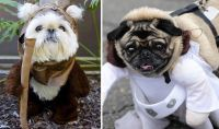 These dogs dressed as Star Wars characters are barking mad ...