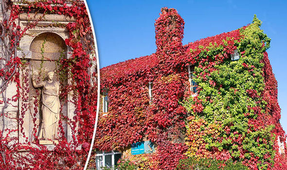 Dream About Wallpaper Falling Off Gardening Advice And Tips From Alan Titchmarsh Vine