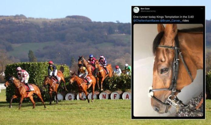 Kings Temptation: Cheltenham Festival slammed as horse dies - 'Simply unacceptable'