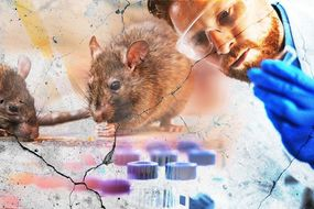 Hantavirus outbreak: what is Hantavirus? What are the symptoms ...