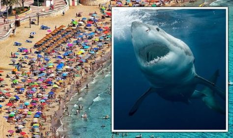 Costa del Terror! Shark fears in Spain as tourists BANNED from entering sea