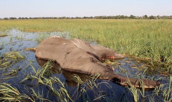 Muertes de elefantes de Botsuana