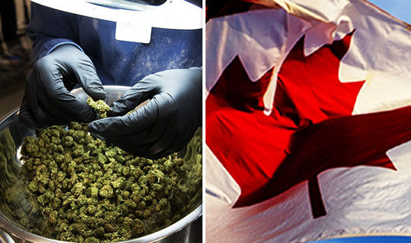 Canada wants to legalise cannabis