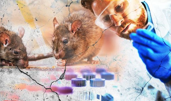 Hantavirus: At least one person dead as China fears new pathogen ...