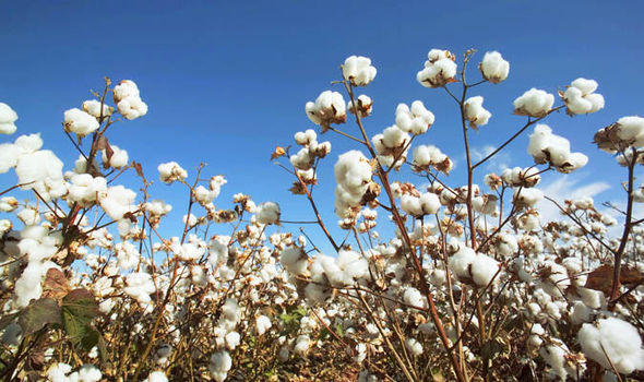 Fall Turkey Wallpaper Jihadists Seize Control Of Syria S Cotton Industry World