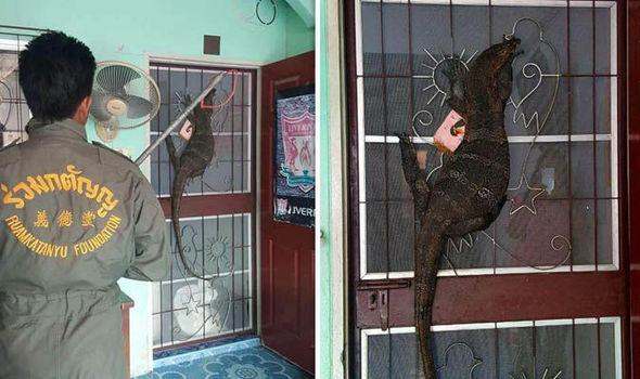 Monitor lizard on the door