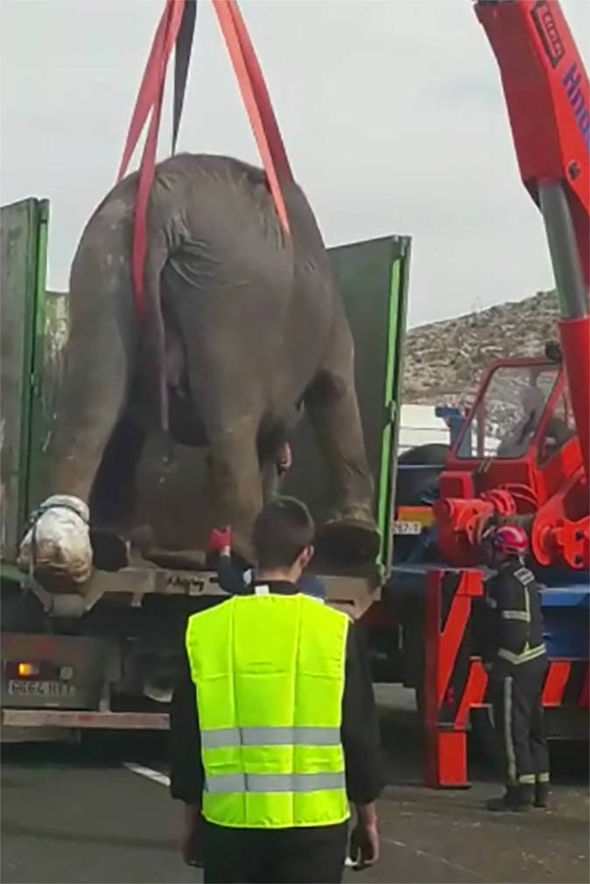 Elephants removed