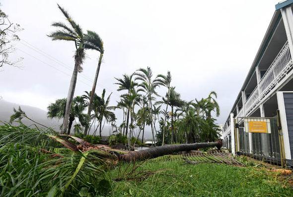 A tree has fallen down in Queensland