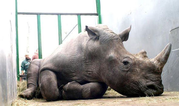 Vince the rhino was shot dead
