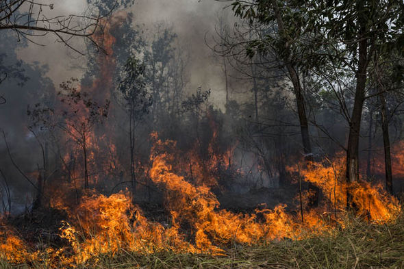 Indonesia's wildfire epidemic