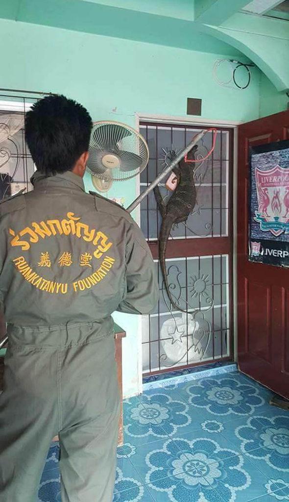 Monitor lizard at the door
