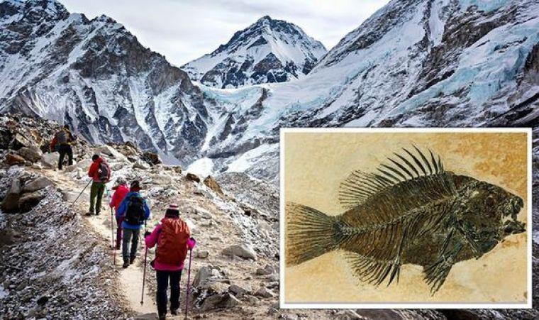 Se dice que se han encontrado restos de peces fosilizados