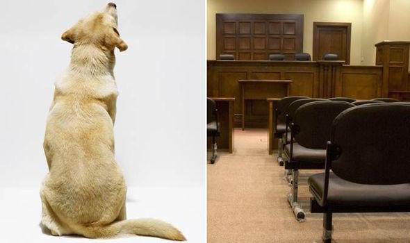 dog, court, France, murder trial, labrador