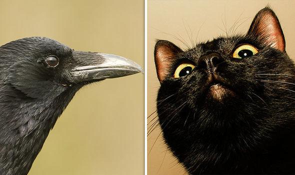 optical illusions find cat # 30