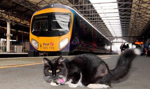 Purrrfectstation cat gets her own VIP ticket barrier
