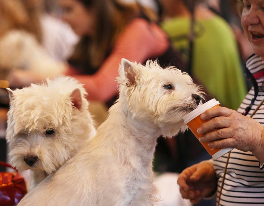 Dogs and owners arrive for the first day of Crufts Dog Show at NEC Arena on March 09, 2017 in Birmingham