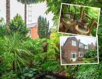 Secret tropical rainforest built in Leeds garden ...