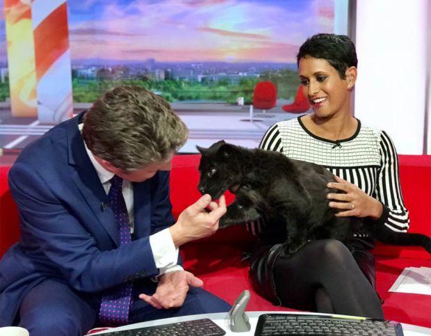 Maya the Jaguar visited Naga Munchetty and Charlie Stayt on BBC Breakfast