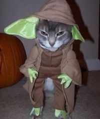 Yoda Cat Halloween costume | Star Wars pug parade ...