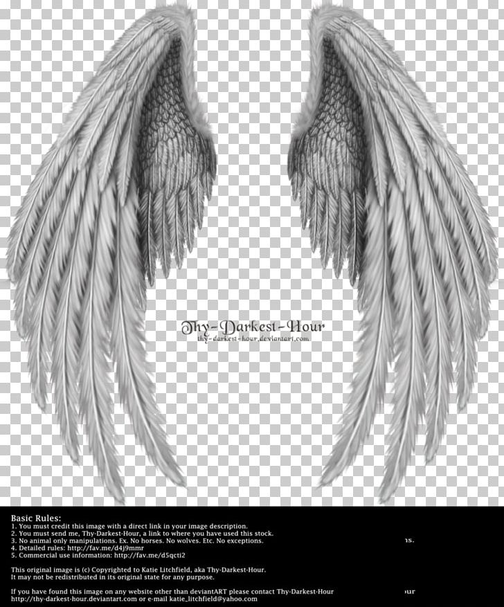 Angel Wings Png Clipart : angel, wings, clipart, Angel, Clipart,, Angel,, Angels,, Wing,, Wings,, Black, White, Download