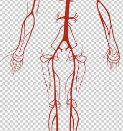 artery vein circulatory system human body blood vessel png clipart abdomen anatomy arm cap circulatory system  [ 728 x 1359 Pixel ]