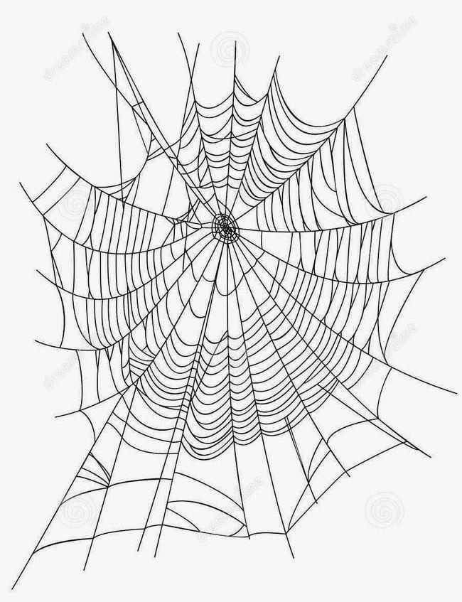 Creative Cartoon Spider Web Spider Web Icon PNG, Clipart