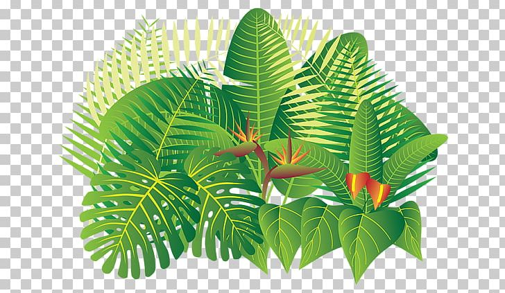 Hand drawn woodland trees, herbs, mushrooms, flowers, branches, berries, leaves. Tropical Rainforest Tropics Plant Png Clipart Banana Leaf Flower Flowerpot Forest Jungle Free Png Download