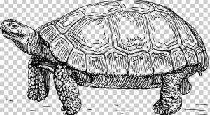 Label Turtle Diagram   Wiring Diagrams