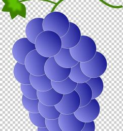 red wine common grape vine png clipart circle clip art cluster color common grape vine free  [ 728 x 1257 Pixel ]