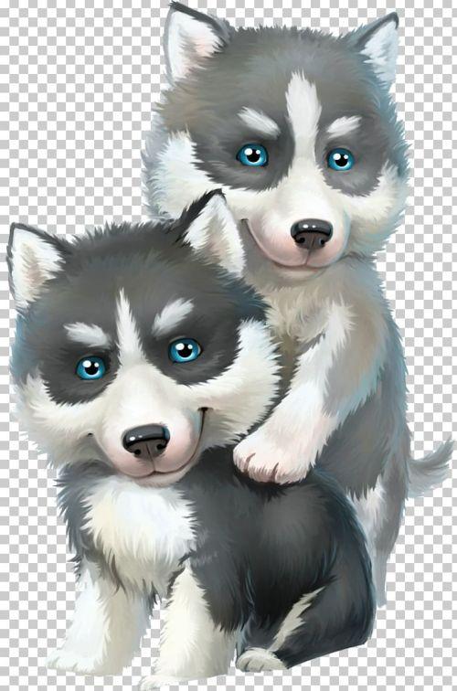 small resolution of alaskan malamute siberian husky sled dog png clipart alaskan klee kai carnivoran child cuteness dog breed