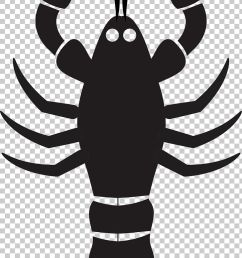 lobster mussel seafood png clipart american lobster black and white cartoon cartoon lobster drawing free png download [ 728 x 1348 Pixel ]