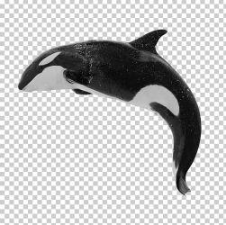 Killer Whale Baleen Whale Humpback Whale Blue Whale PNG Clipart Animals Baleen Whale Blue Whale Bowhead