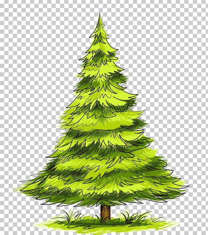 spruce pine tree drawing