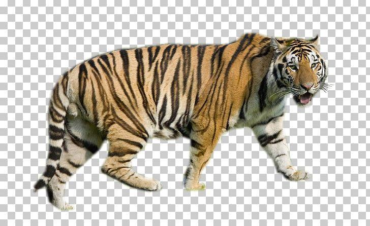 tiger internet media type