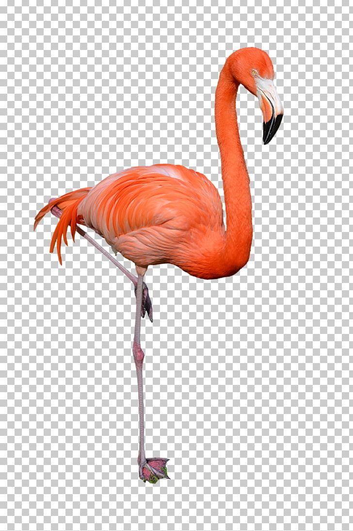 hight resolution of clipart flamingo