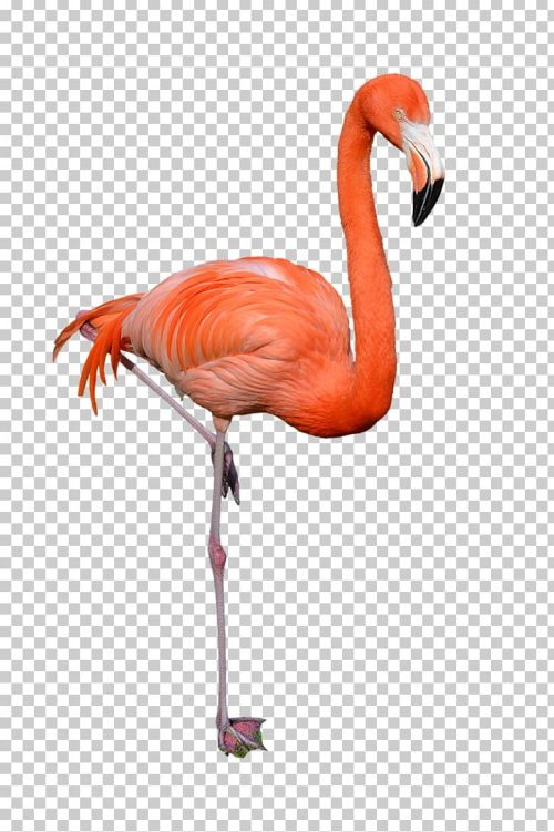 small resolution of clipart flamingo