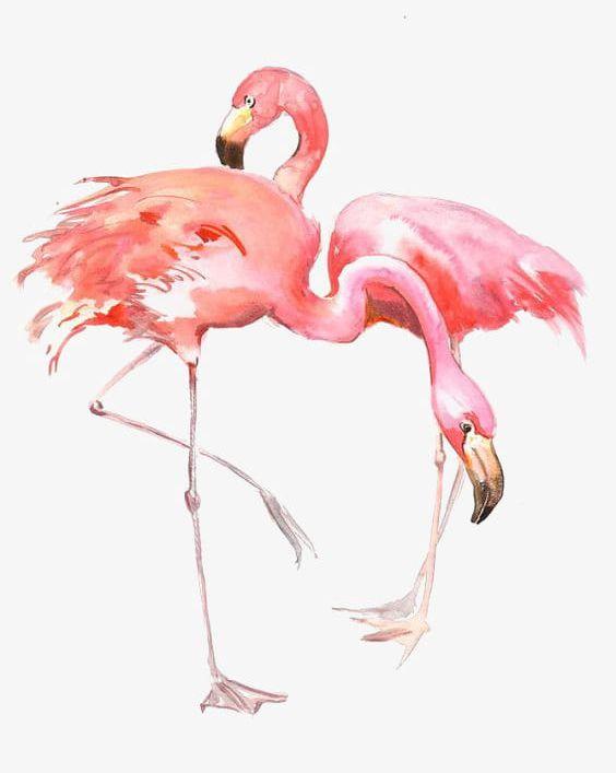 drawing flamingos png clipart