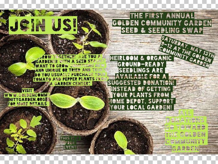stock photography flowerpot seedling
