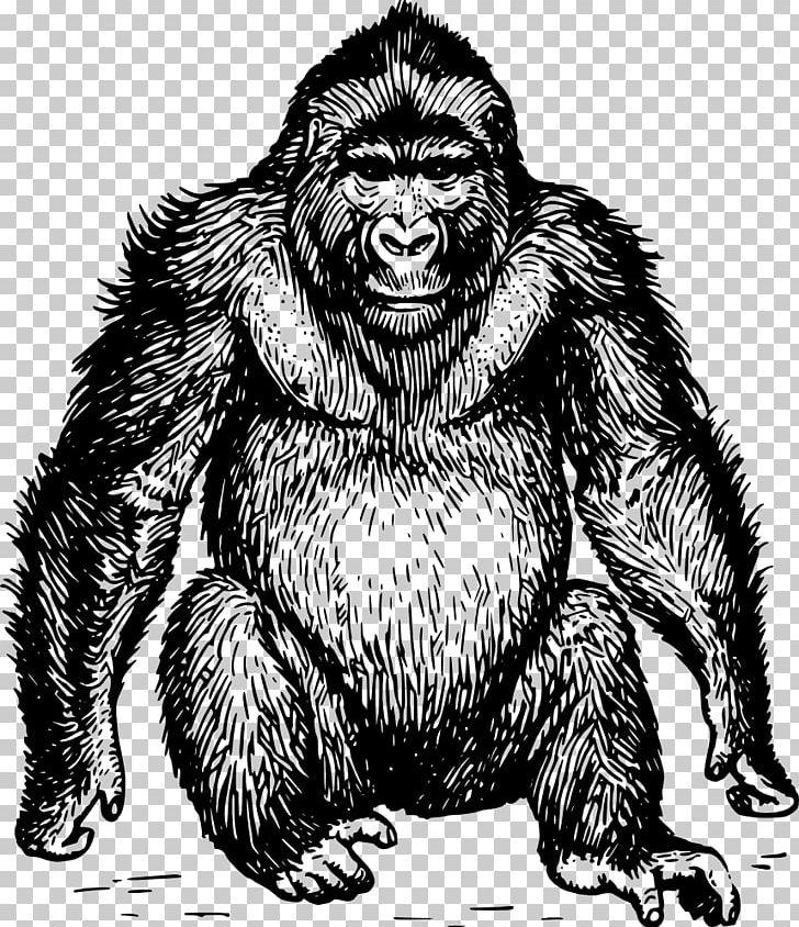 ape gorilla orangutan chimpanzee