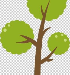 green tree diagram png clipart backgro botany branch christmas tree diagram free png download [ 728 x 1176 Pixel ]