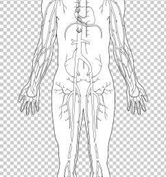 human body homo sapiens diagram hand png clipart anatomy arm art diagram drawing free png download [ 728 x 1337 Pixel ]
