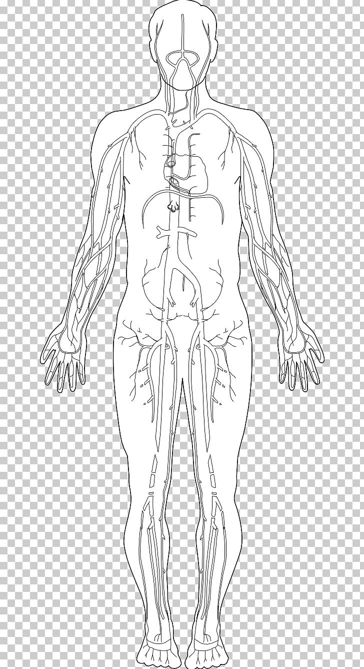 hight resolution of human body homo sapiens diagram hand png clipart anatomy arm art diagram drawing free png download