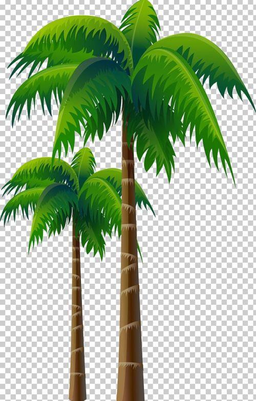 small resolution of arecaceae coconut tree woody plant png clipart arecaceae arecales asian palmyra palm attalea attalea speciosa free