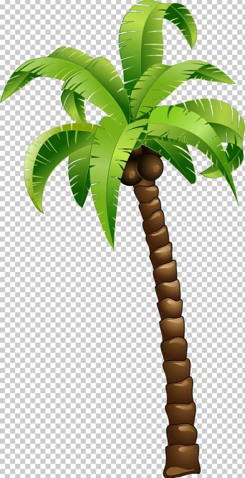 small resolution of coconut tree png clipart arecales balloon cartoon cartoon cartoon couple cartoon eyes free png download