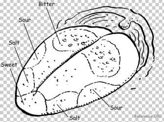 Tongue Map Taste Bud Olfaction Diagram PNG Clipart Art Black And White Brain Cartoon Circle Free