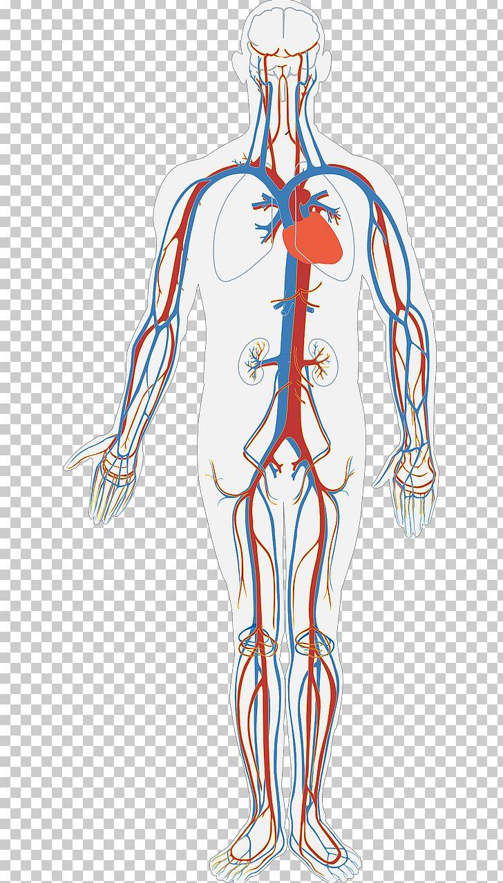 hight resolution of circulatory system diagram human body anatomy organ system png clipart arm art blood blood bag