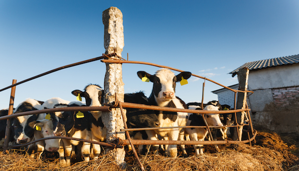 Methane Digesters Dairy Farms
