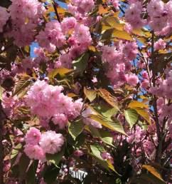magnolium tree diagram [ 2048 x 1365 Pixel ]