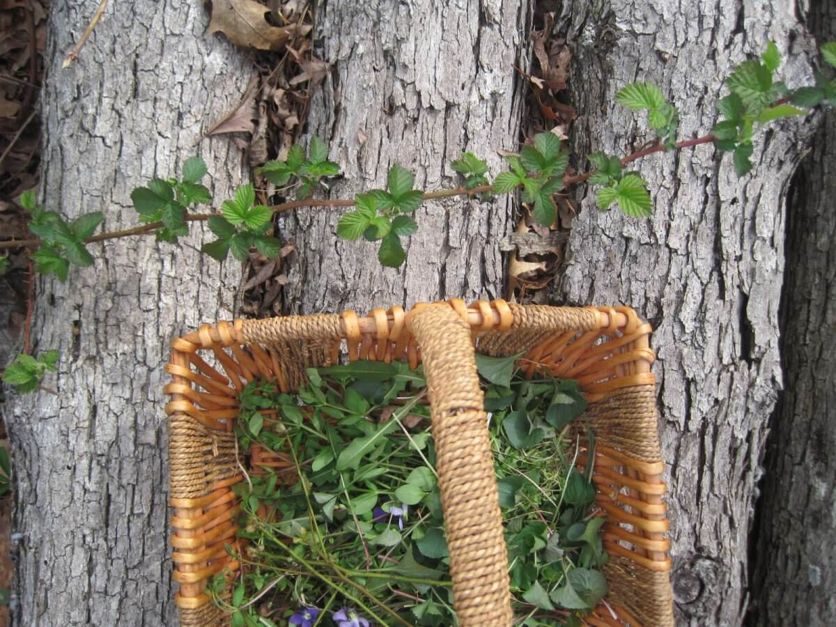 Ground Rules for Foraging Safely • Insteading