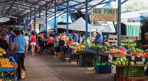Fresh Market 102 Store